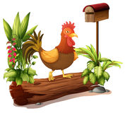 A rooster above a trunk Royalty Free Stock Photos