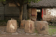 Rooster Baskets, Bali, Indonesia Stock Photo