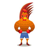 Rooster boxer in gloves Stock Photos