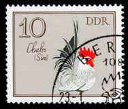 Rooster Chabo Cock from the series German Cocks, circa 1979 Stock Photography