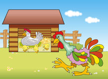 Rooster, Chicken and chicks Royalty Free Stock Images