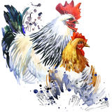 rooster and chicken illustration with splash watercolor textured background. Stock Photo