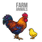 Rooster and chicken poultry farm. Vector illustration sketch isolated on white background hand-drawn set farm rooster and birds yellow chick, chicken family Royalty Free Stock Photography