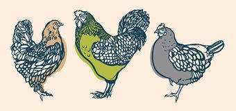 Rooster and chicken. Poultry. Farming. Livestock raising. Hand drawn. Stock Images