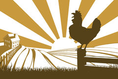 Rooster chicken silhouette crowing Royalty Free Stock Images