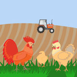 Rooster and chickens on the bacgroung of rural landscape Stock Photos