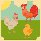 Rooster and chickens Royalty Free Stock Photos