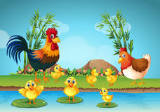 Rooster and chicks by the river. Illustration Royalty Free Stock Photos