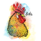 Rooster, Chinese zodiac symbol of the 2017 year. Vector illustration over watercolor background. Head cock in red colors Royalty Free Stock Image