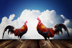 Rooster with cloudy sky background Stock Photos