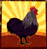 Rooster - Stock Photography