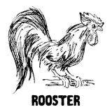 Rooster or cock bird. Hand drawn sketch vector illustration. Rooster or cock bird. Hand drawn sketch vector illustration Royalty Free Stock Image