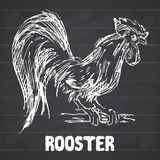 Rooster or cock bird. Hand drawn sketch vector illustration on chalkboard. Rooster or cock bird. Hand drawn sketch vector illustration on chalkboard Royalty Free Stock Photos