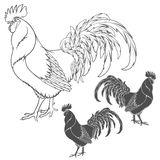 Rooster or cock hand drawn sketch. EPS10 Royalty Free Stock Photography