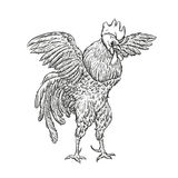 Rooster. Cock Illustration in Vintage engraving style. Grunge label, sticker for the farms and manufacturing depicting. Roster. Grunge label for the chicken Stock Image