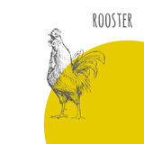 Rooster cock  isolated sketch. New Year Symbol. Rooster cock. Vector isolated hand drawn pencil sketch rooster chicken with comb, hen, cockerel. Detailed feather Stock Image