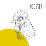 Rooster cock  isolated sketch. New Year Symbol. Rooster cock. Vector isolated hand drawn pencil sketch rooster chicken with comb, hen, cockerel. Detailed feather Royalty Free Stock Image