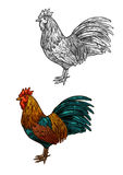 Rooster cock vector sketch icon for Christmas Stock Image