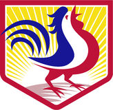 Rooster Cockerel Crowing Crest Stock Photo