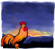 Rooster. Or cockerel  crowing at sunrise Royalty Free Stock Images