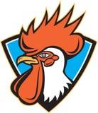 Rooster Cockerel Head Crest Stock Image