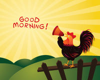 Rooster Crowing and Announcing with Megaphone, Good Morning Royalty Free Stock Photo
