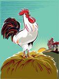 Rooster at dawn from the alarm singing. Stock Photo
