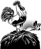 Rooster at dawn from the alarm singing, Stock Photography