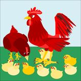Rooster and family Royalty Free Stock Photography