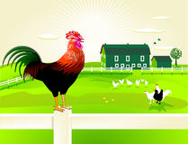 Rooster and farm. Proud rooster guarding his farm Stock Image