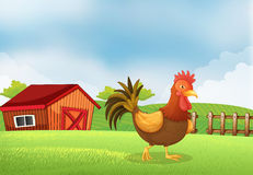 A rooster in the farm with a wooden house at the back Royalty Free Stock Images