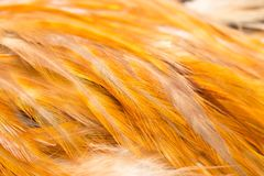 Rooster Feather background. Fine texture Royalty Free Stock Photos