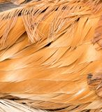 Rooster Feather background. Fine texture Royalty Free Stock Image