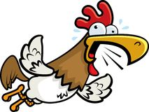 Rooster Flying Royalty Free Stock Photo