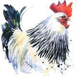 Rooster graphics, rooster illustration with splash watercolor textured background. illustration watercolor breeding rooster fashio Stock Images