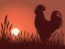 Rooster greeting sunrise. On a lawn stock illustration