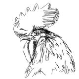 Rooster. Hand drawn rooster head illustration Stock Photo
