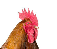 Rooster head. Isolated on white stock photography