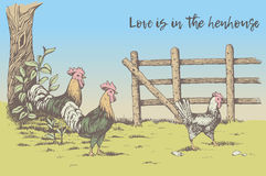 Rooster, hen and chicken at the farm Stock Photos