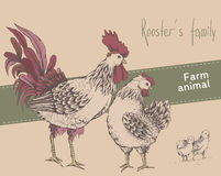 Rooster, hen, chicken Royalty Free Stock Photo