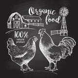 Rooster hen farm Royalty Free Stock Image