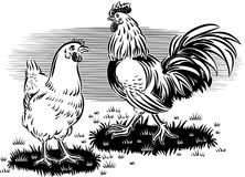 Rooster and hen Royalty Free Stock Image