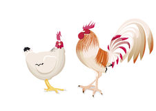 Rooster and hen in talking Royalty Free Stock Photo