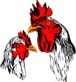 Rooster and hen Stock Images