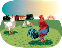 Rooster and hens in an open meadow Stock Photography
