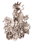Rooster and hens. Sepia illustration, own work Royalty Free Stock Images