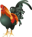 Rooster illustration Royalty Free Stock Photography