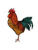 Rooster Illustration. Hand drawn illustration of a rooster stock illustration