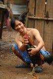 Rooster, innan cockfighting Arkivbild