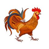 Rooster. Isolated stock illustration